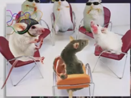 Mouse support group